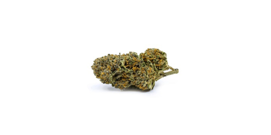 rotterdam-indica weed strain for sale online at pot store in scarborough